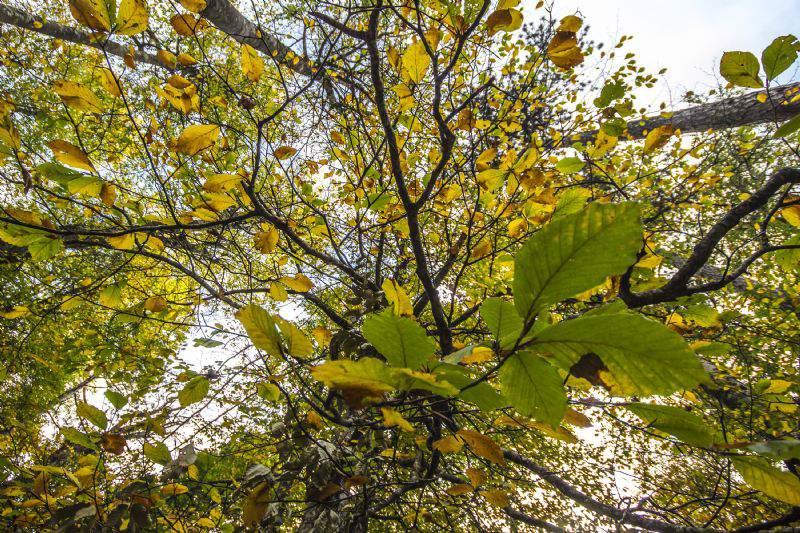 Kazdağları'nın sonbahar renkleri büyülüyor