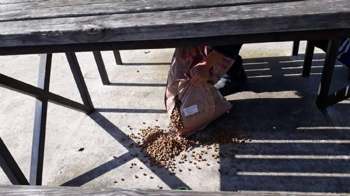 Biga'da Sokak Hayvanları Yalnız Değil