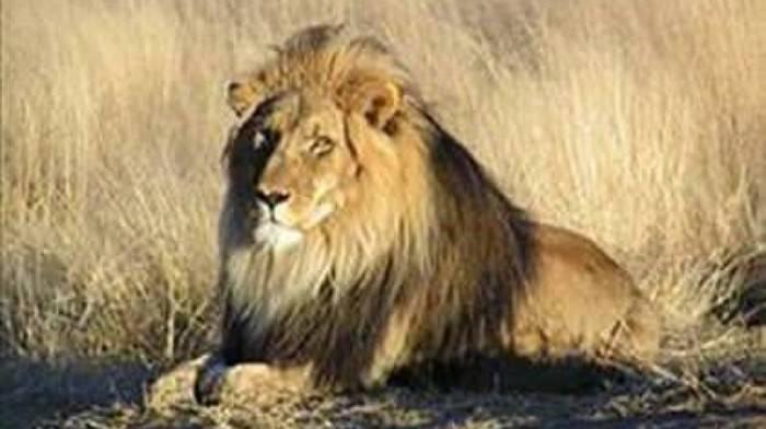 Dünyanın En Tehlikeli 10 Hayvanı!