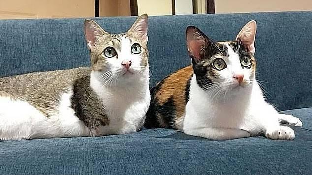 'İki ayaklı kedi' sosyal medyayı bakın nasıl salladı