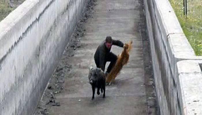 Hızlı domuz, görevlileri perişan etti