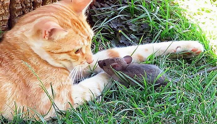 Kedi, fareyle böyle oynadı (VİDEO)