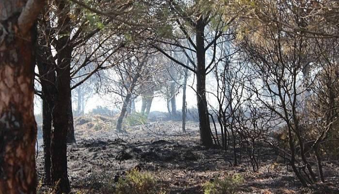Çanakkale'deki orman yangını