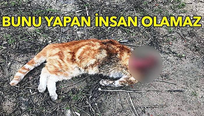 Kafası kesilen kedi hayvanseverleri harekete geçirdi