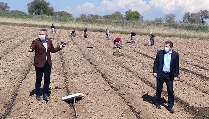 Vali Tavlı Batak Ovası'nda çiftçiye destek oldu