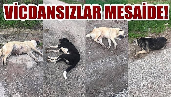 VİCDANSIZLAR MESAİDE: Işıklar Köyü girişinde hayvan katliamı
