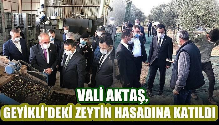 Geyikli Beldesindeki Zeytin Hasadı, Vali Aktaş'ın Katılımıyla Gerçekleştirildi
