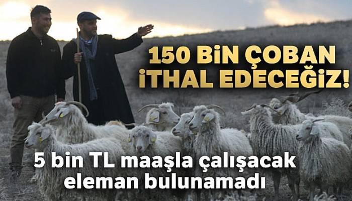 150 bin çoban ithal edeceğiz