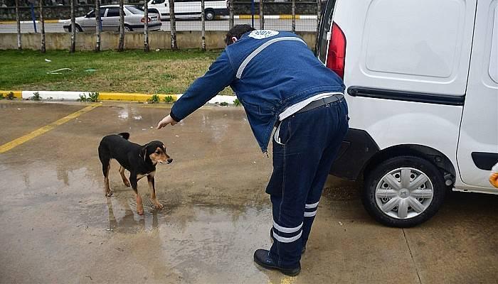 Biga Belediyesi sokak hayvanlarına bakıyor