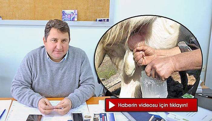 """""""Süt veren tekenin fizyolojisi bozuluyor"""" (VİDEO)"""