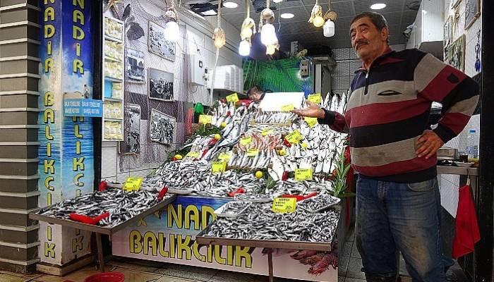 Karadeniz hamsisinin kilogram fiyatında düşüş sürüyor (VİDEO)