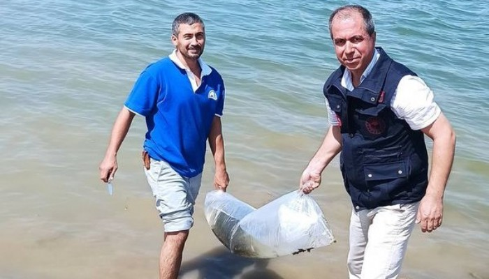Baraja 75 bin sazan balığı yavrusu bırakıldı