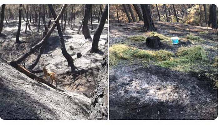 Yangında ölümden kurtarılan ceylan, yeniden doğaya salındı