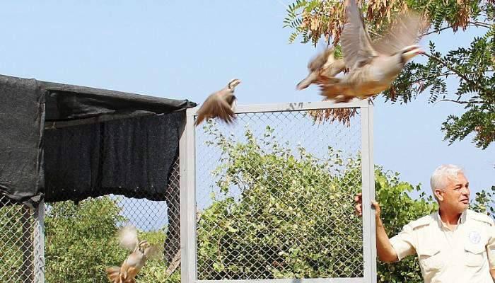 Darbe mağduru keklikler doğaya salındı