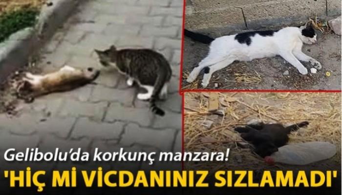 Gelibolu'da çok sayıda kedi zehirlenerek öldürüldü