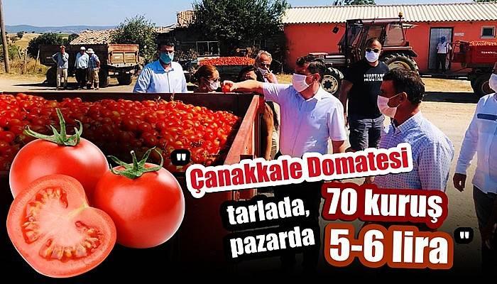 'Çanakkale Domatesi tarlada 70 kuruş, pazarda 5-6 lira'