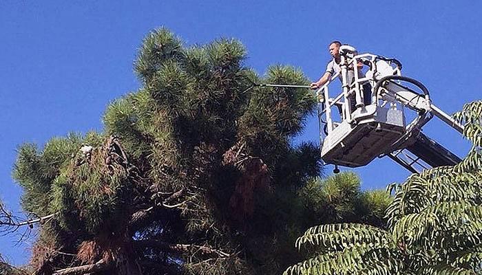 Ağaçta mahsur kalan kedi 1 saatte kurtarıldı