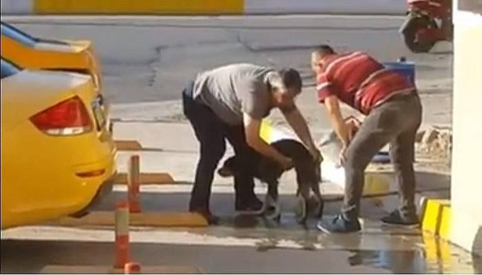 Taksiciler kirli sokak köpeğini sabunla yıkadı (VİDEO)