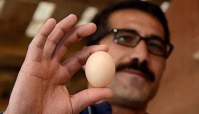 Bu yumurtanın tanesi 100 Lira