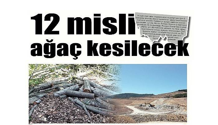 12 misli ağaç kesilecek