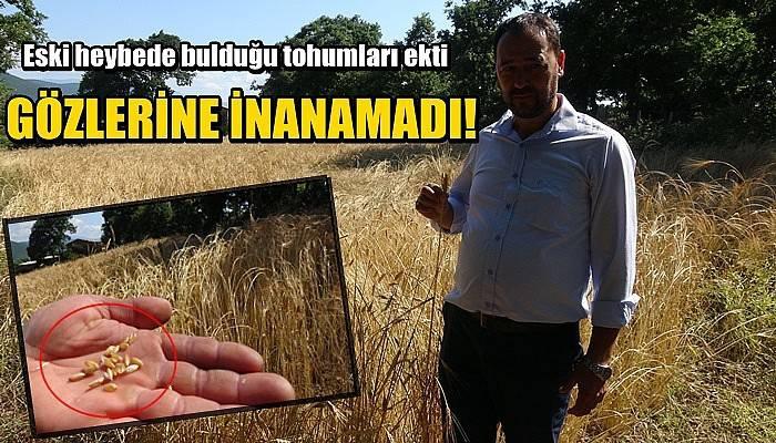 Eski heybede bulduğu tohumları ekti, gözlerine inanamadı (VİDEO)
