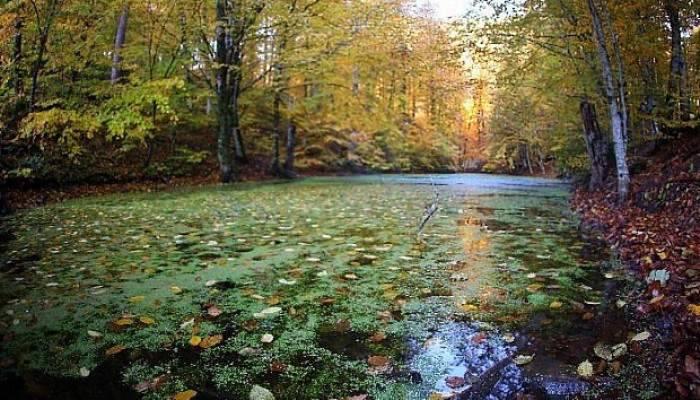 En doğal fotoğraflarla Yedigöller Sonbaharda büyüledi