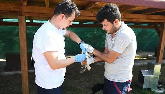 Çanakkale Belediyesi veterinerleri, Kedi Köyü'ndeki canlıları aşıladı