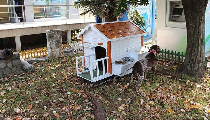 Köpek sahiplenene kulübe hediye