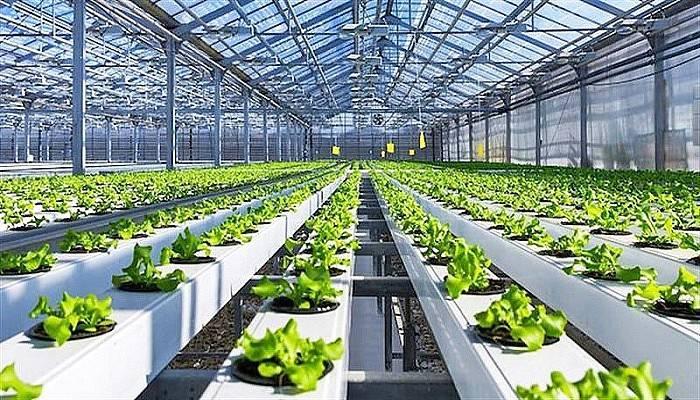 Tarımsal Üretime Yönelik İşletme Ve Yatırım Kredilerinde Faiz İndirimi