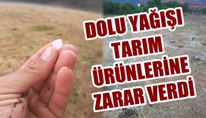Çanakkale Yenice'de dolu tarım ürünlerine zarar verdi (VİDEO)