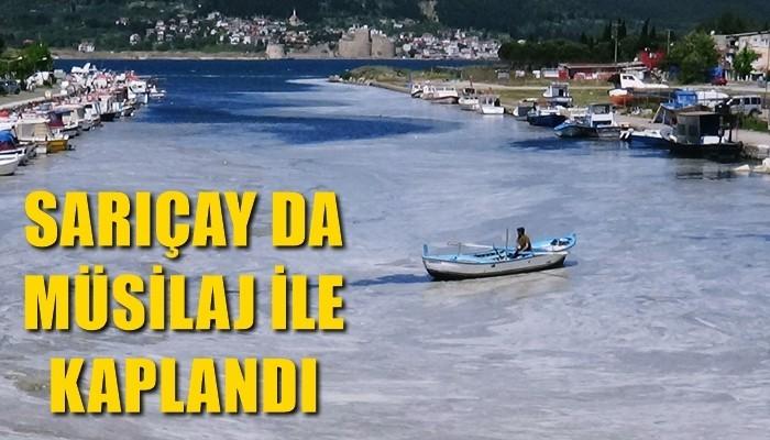 Çanakkale Boğazı'ndan sonra Sarıçay da müsilaj ile kaplandı (VİDEO)