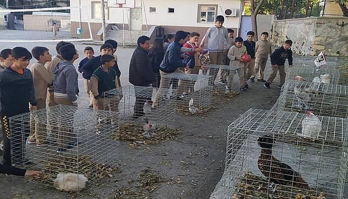 İlkokul öğrencileri kanatlı hayvan türleriyle tanıştı