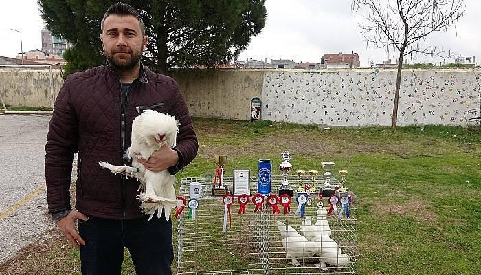 Türkiye şampiyonu Osmanlı horozu 'Pusat'a paha biçilemiyor (VİDEO)