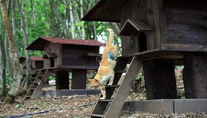 Kedi Köyü projesi için hazırlıklar devam ediyor