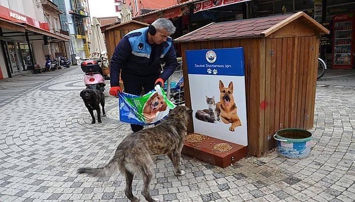 Ezine'de sokak hayvanları unutulmadı