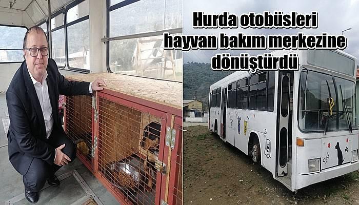 Belediye, hurda otobüsleri hayvan bakım merkezine dönüştürdü (VİDEO)