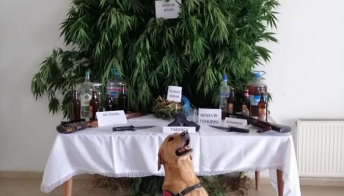 Çanakkale'de uyuşturucu ve sahte içki operasyonu: 11 gözaltı (VİDEO)