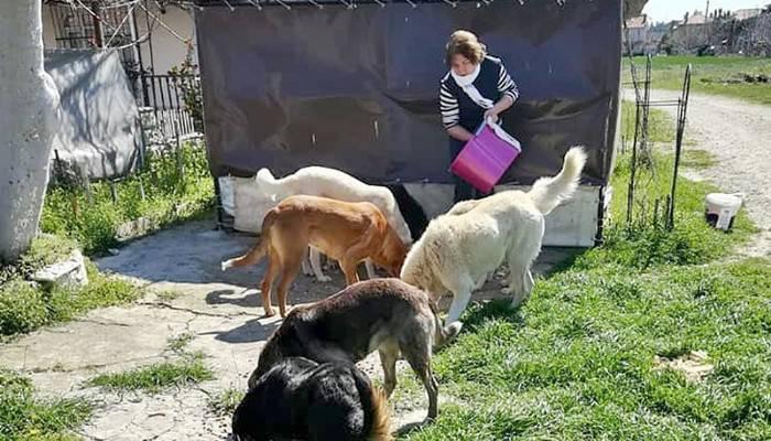 İnsanlar evlere kapandı, aç kalan sokak köpeklerini hayvanseverler besledi