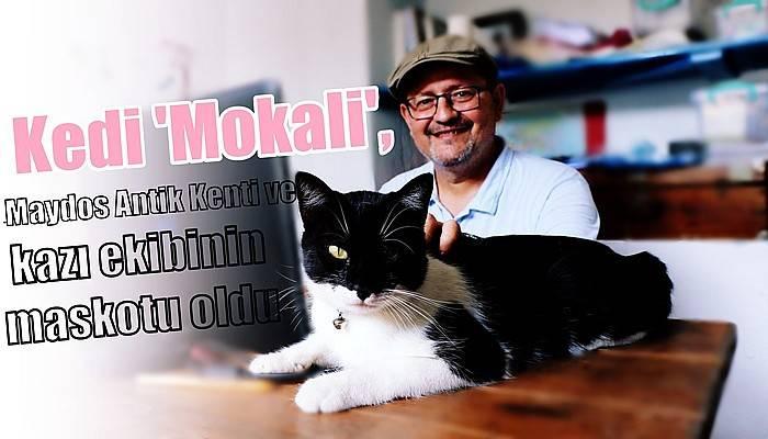 Kedi 'Mokali', Maydos Antik Kenti ve kazı ekibinin maskotu oldu (VİDEO)