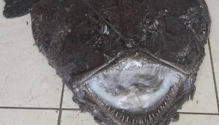 Balıkçıların Ağına Fener Balığı Takıldı