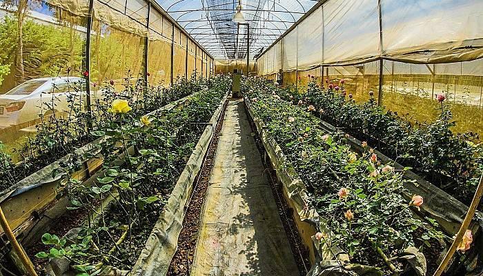 Bitki koruma ürünleri bayi ve toptancılık sınavı yapılacak