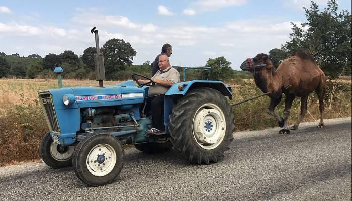 Güreş devesine traktörü ile antrenman yaptırıyor (VİDEO)