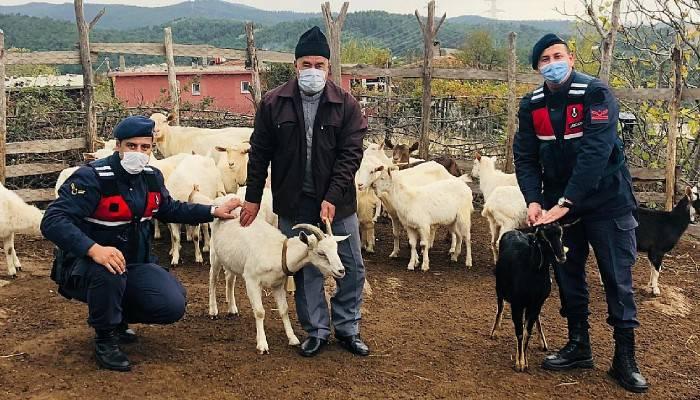 Kayıp koyunlar drone ile bulundu