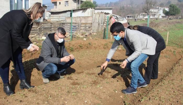 Çan Belediyesi salep fidelerinin gelişimini Tarım Müdürlüğü ile birlikte takip ediyor
