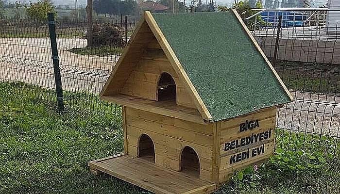 Biga Belediyesi'nden kedi evleri projesi (VİDEO)