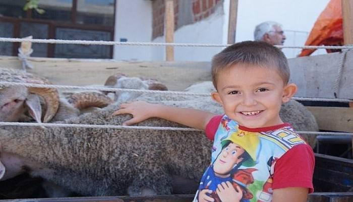 Lapseki'de kurbanlık küçükbaş hayvan pazarı kuruldu