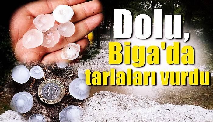 Dolu, Biga'da tarlaları vurdu