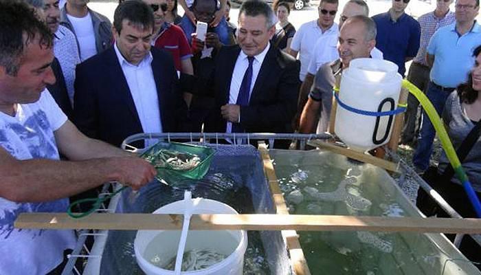 Çanakkale Boğazına 2 bin deniz levreği salındı (VİDEO)