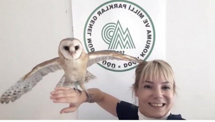 Yavru peçeli baykuş 'Fışfış', 3 aylık bakım sonrası doğaya salındı (VİDEO)
