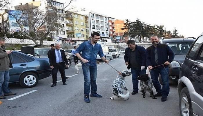 Biga'da av köpekleri aşılandı